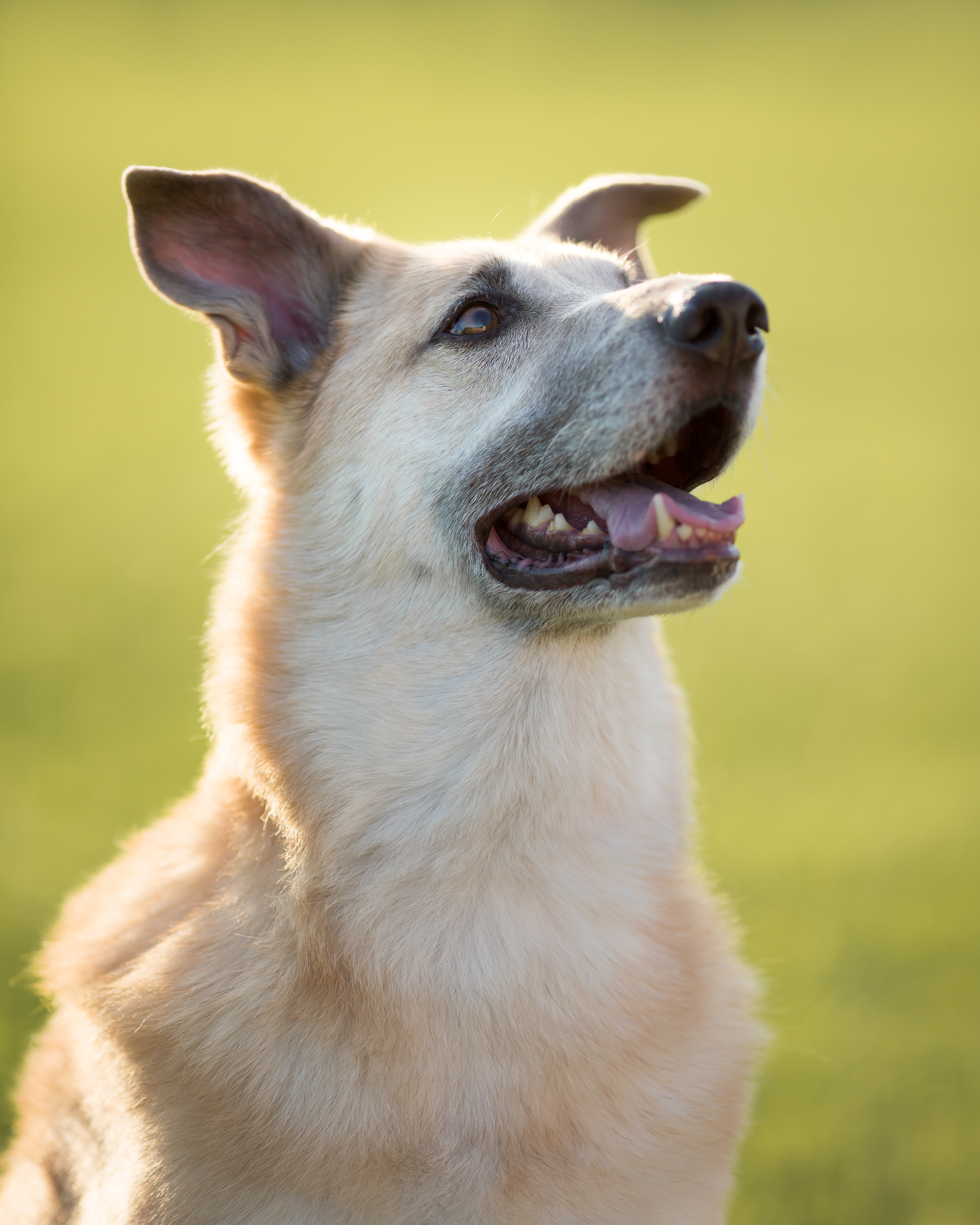 Denver Pet Photography, Denver Pet Portraits, Pet Photos Denver, Cat Photography Denver, Animal Photos, Denver Dog Photography