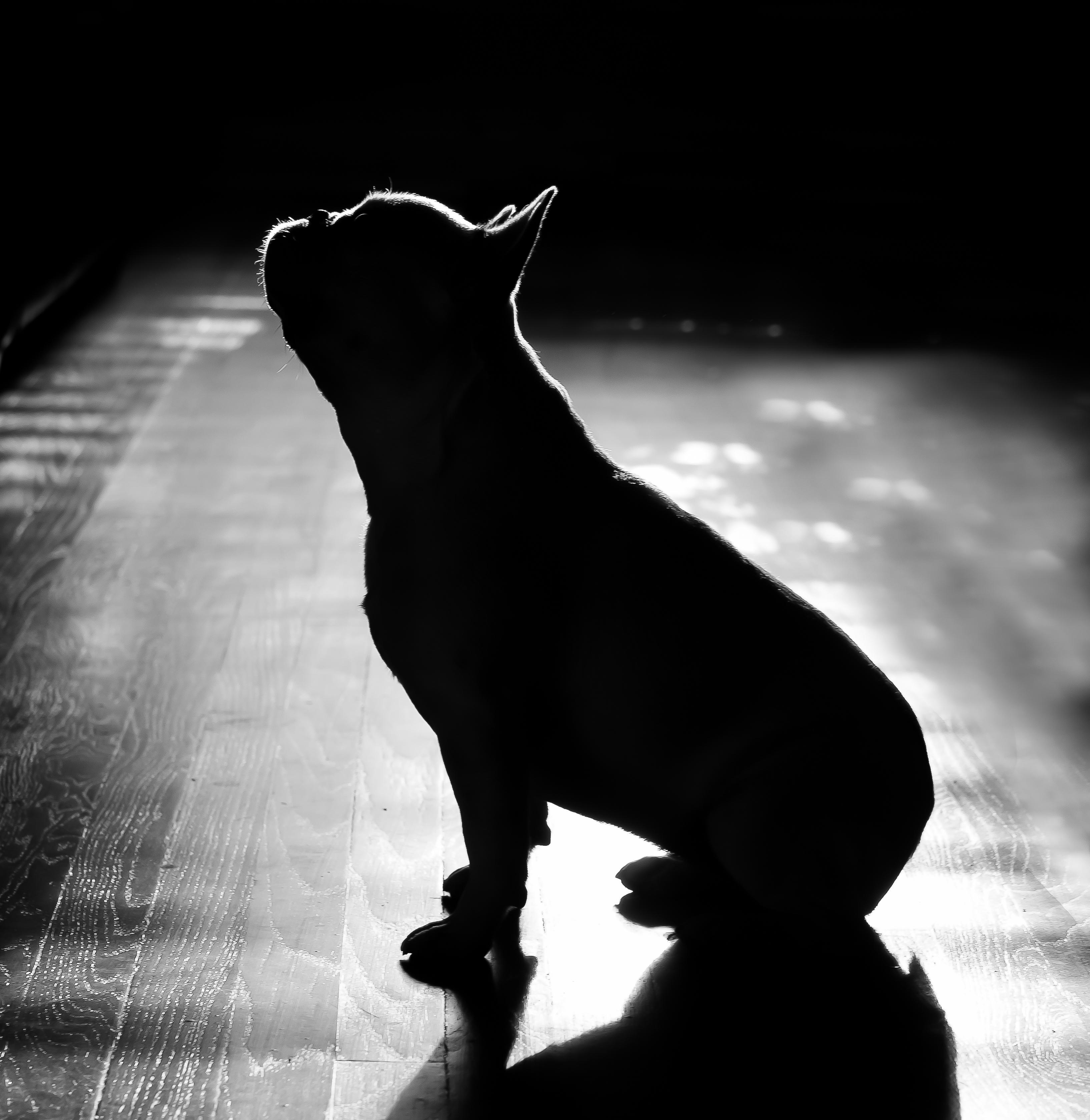 Denver Pet Portraits, Denver Studio Pet Photography