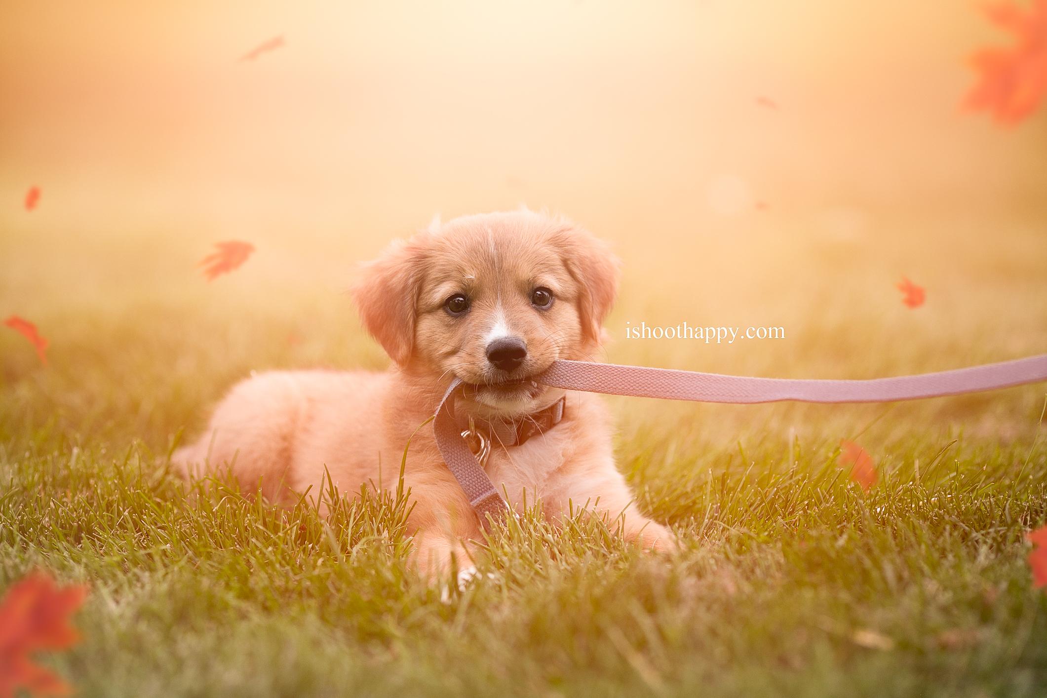 denver best pet photographer, pet photographer, puppy, pet photography, denver puppy photo, pet photographer denver, photography for pets in denver