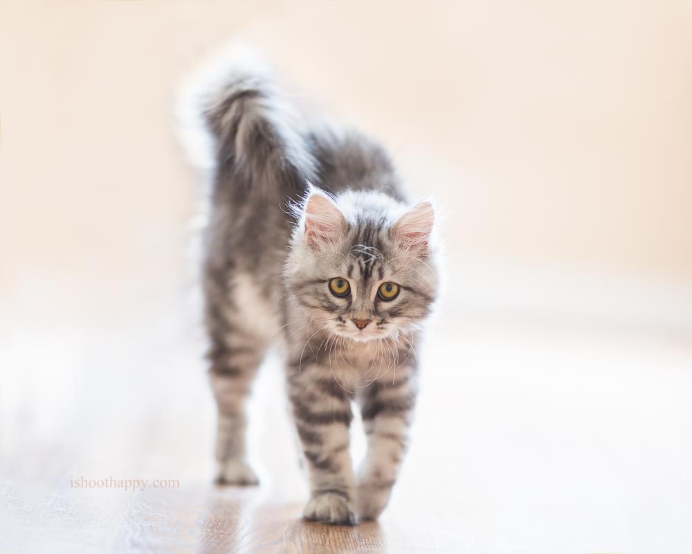 Denver Pet Photography, Denver Pet Portraits